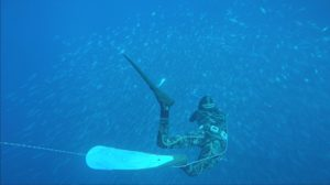 Freediving/Spearfishing Gear